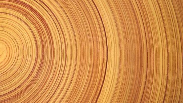 นักวิทยาศาสตร์สร้าง Super wood ไม้รูปแบบใหม่ ที่แข็งแกร่ง และเบากว่าเหล็ก