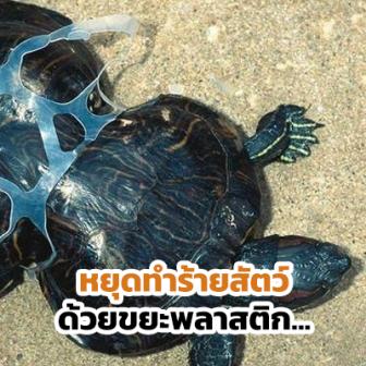 13 ภาพที่แสดงให้เห็นว่า ขยะพลาสติกจากมนุษย์ ทำให้สัตว์ตกอยู่ในอันตราย