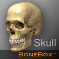 BoneBox Skull Viewer (โปรแกรม Skull Viewer ดูศีรษะ หัวกะโหลก 3D บนเครื่อง Mac ฟรี)